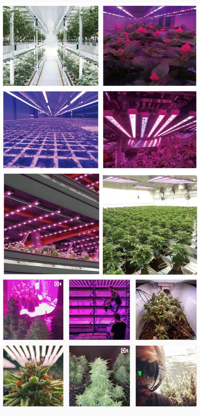 High Power Led Grow Lights For Indoor Gardening , Adjustable Led Plant Grow Lights